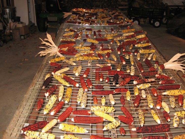 One of two corn drying racks