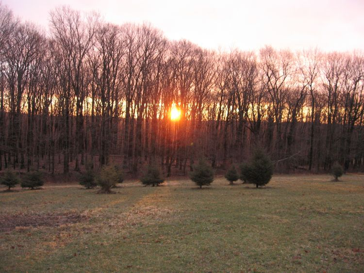 Sunrise at our Farm