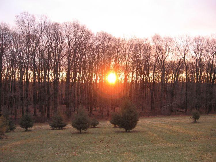January Sunrise 2015