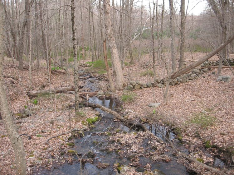 A Gentle Stream by my house