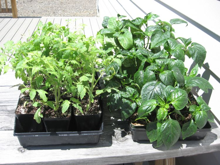 2015 Plants in the Sun