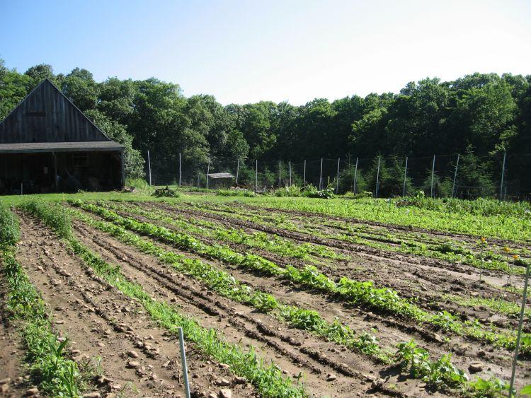 View from our garden toward barn