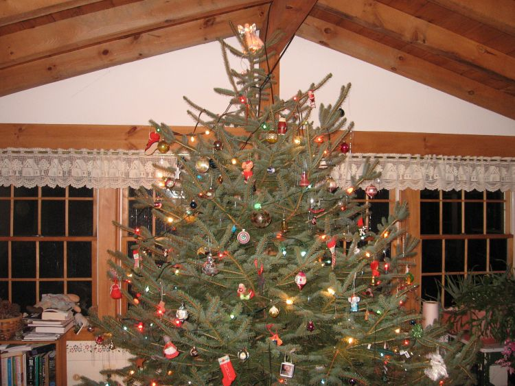 Christmas tree reaches ceiling!