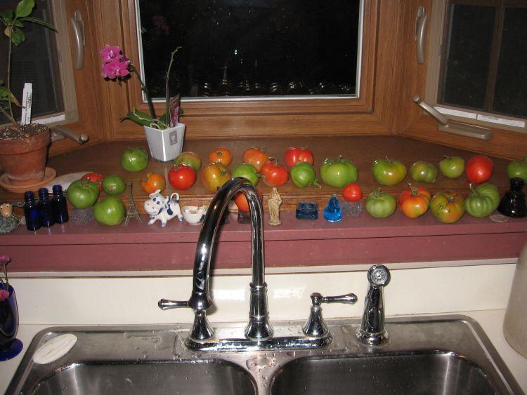 Tomatoes still ripening in Nov.