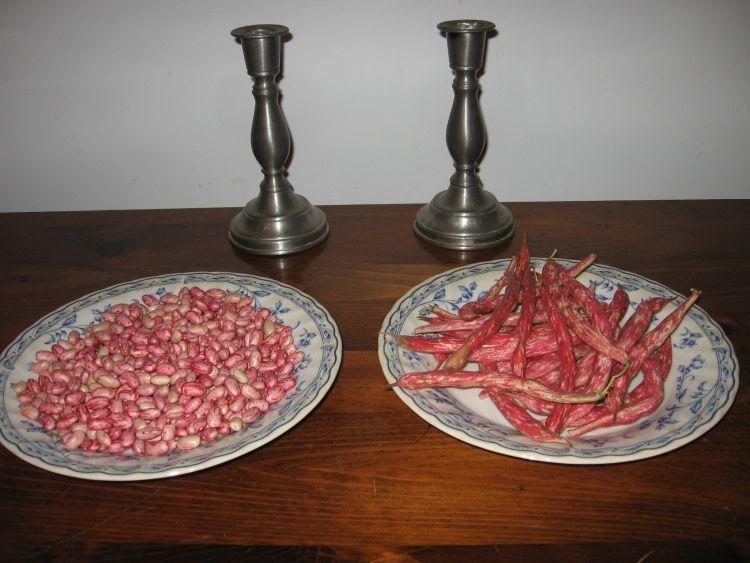 Horticulture Beans