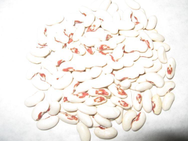 Soldier Bean 150 Seeds
