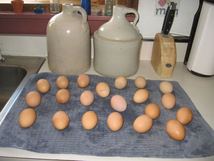 Freshly washed eggs!