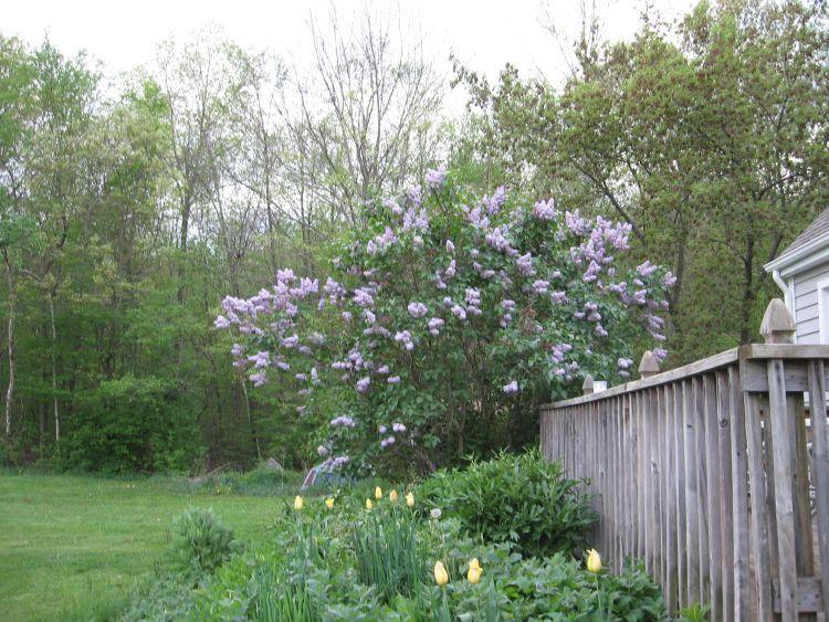The beauty of Springtime.