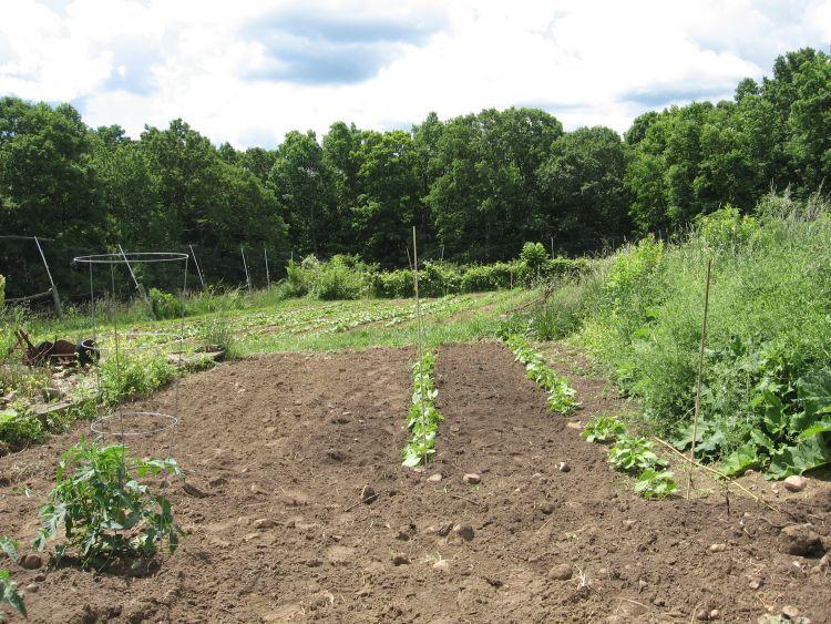 Vegetable Garden view