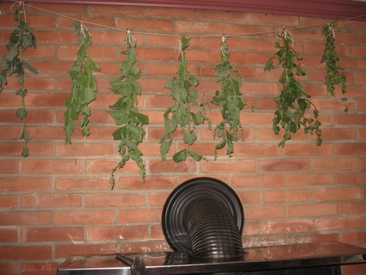 Herbs drying above wood stove