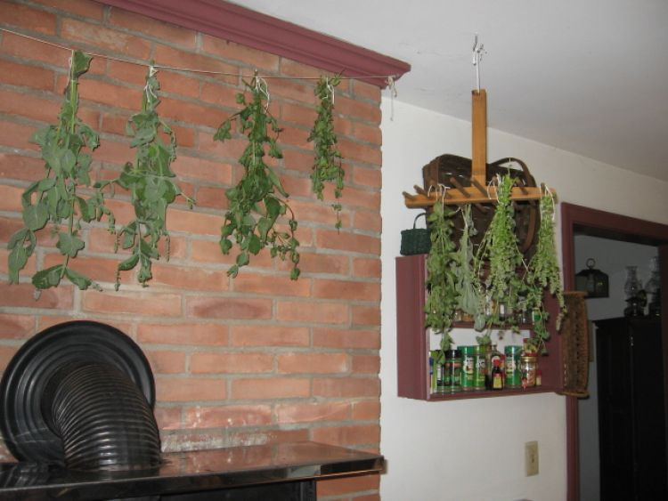 Herbs drying on rack and string