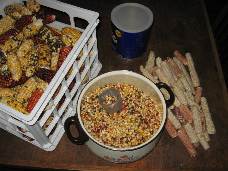 Shelling Corn 2