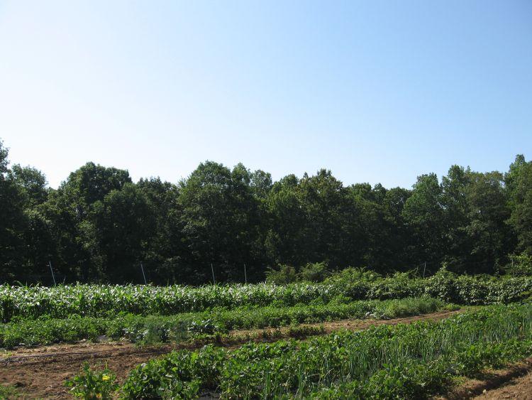 More of our Main Garden
