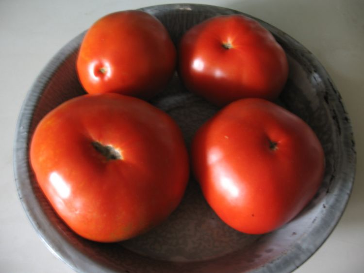 Our Beefsteak Tomatoes!
