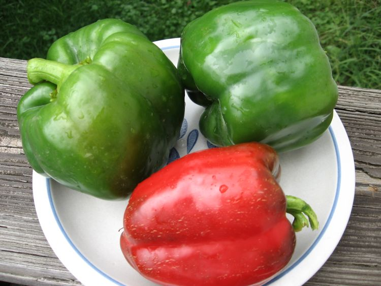 California Wonder Sweet Pepper
