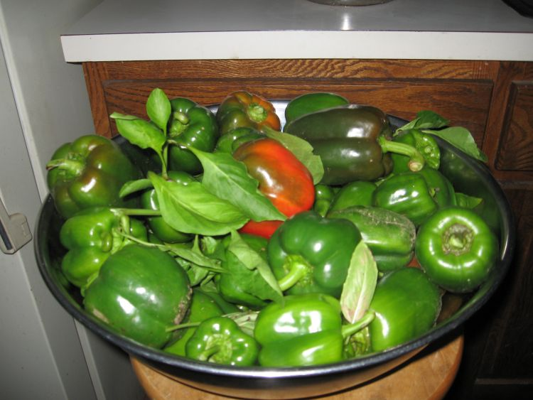 Peppers, just picked!