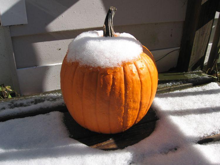 Fall pumpkin survives!