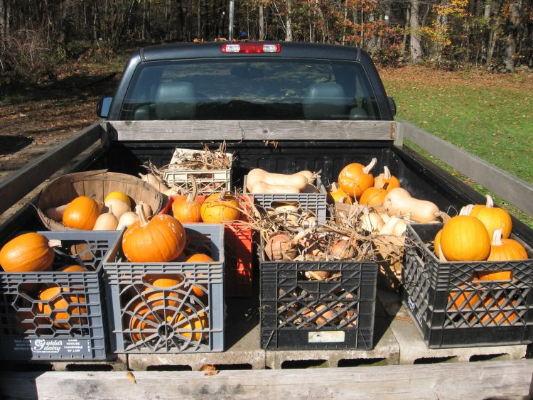Fall Harvest 2011