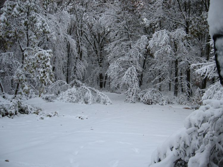 October 2011 Winter Wonderland