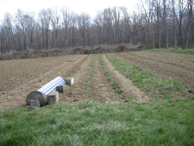 Early crop row cover