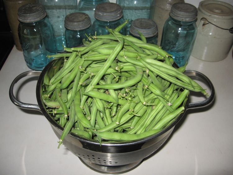 Our Provider Beans just picked!