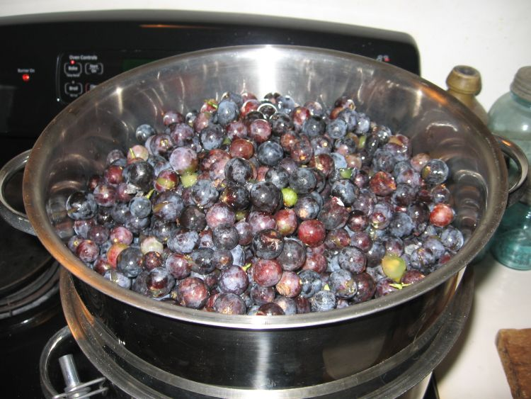 Grapes in a Steam Juicer
