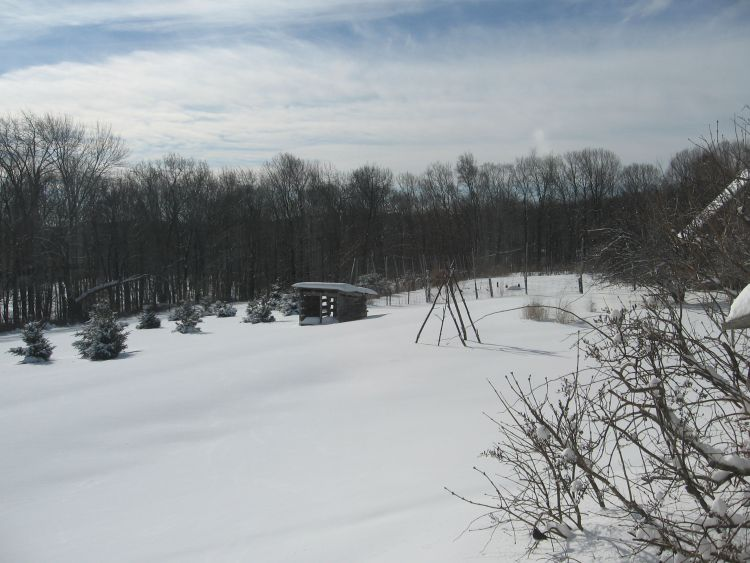 Our back yard in February