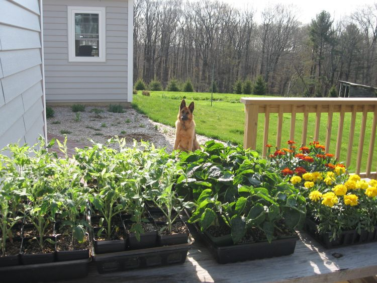 Guarded Plants!