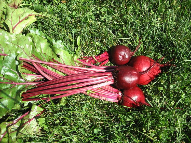 Our Detroit Dark Red Beets 2014