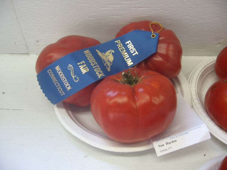 My Prize Winning Tomatoes