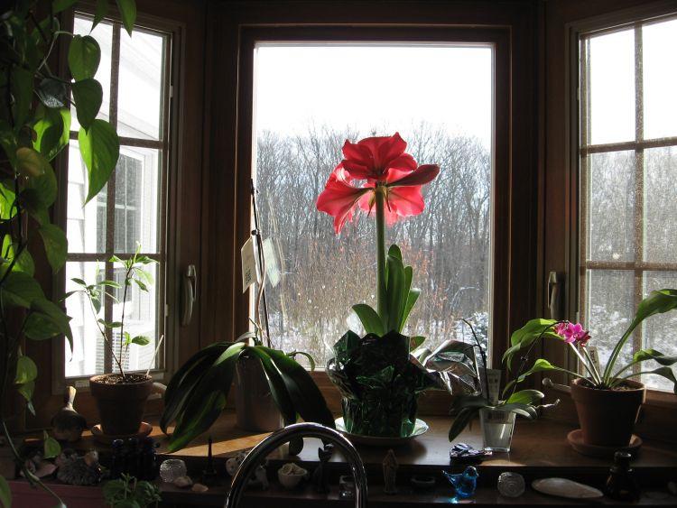Flowers brighten my window
