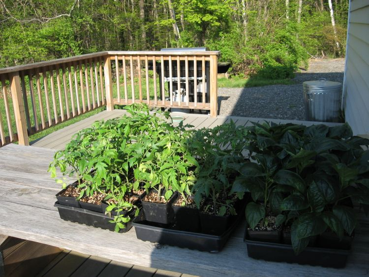 Plants to go in garden