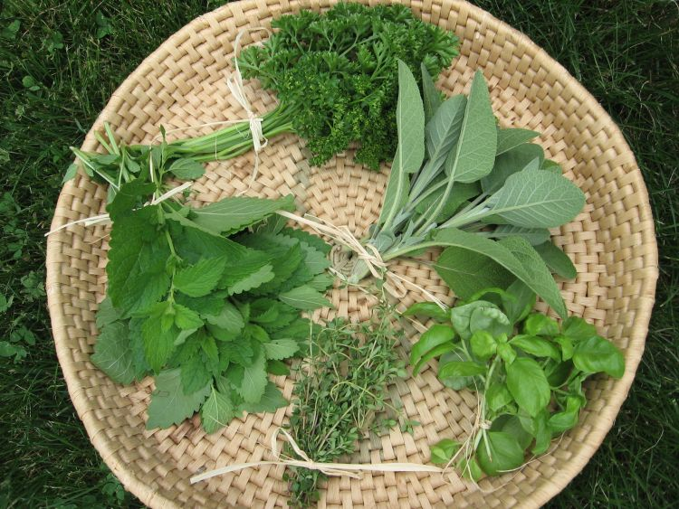 Our Heirloom Herb Collection