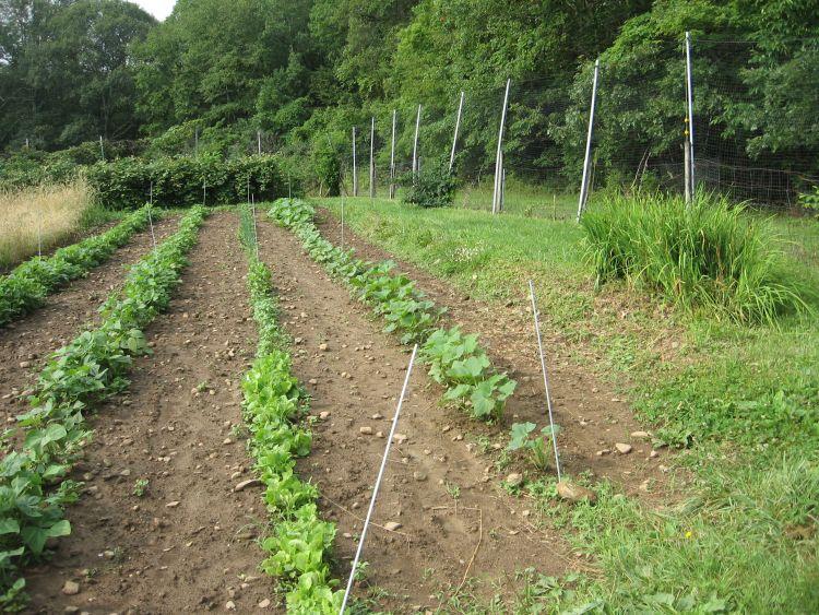 Row crops July 2017
