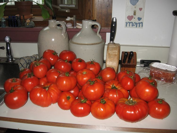Tomatoes ready to can