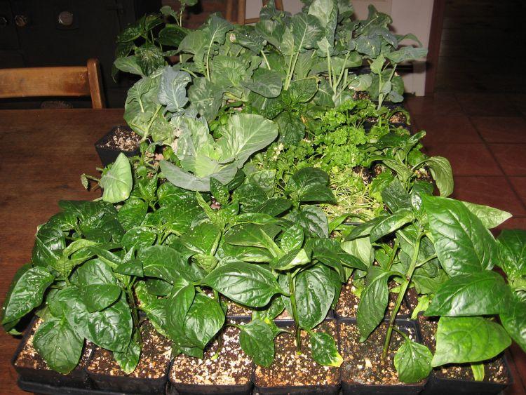 Thriving Plants!