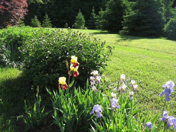 Flowers brighten my yard