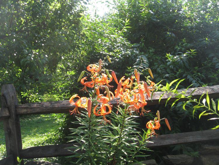 front flower garden