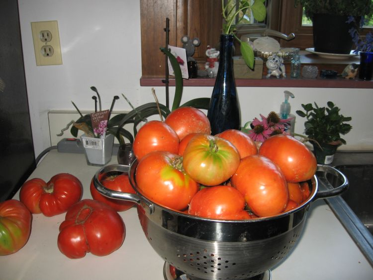 More 2018 Tomato Harvesting