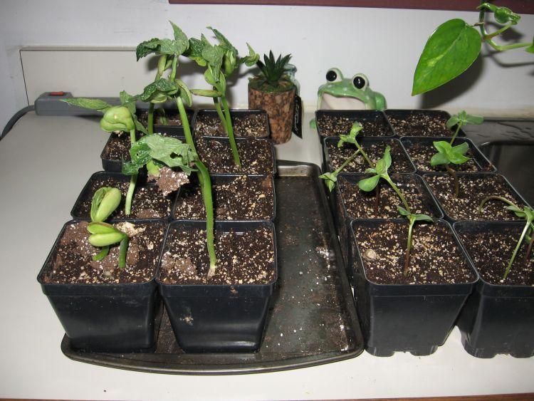 Precious Seeds!