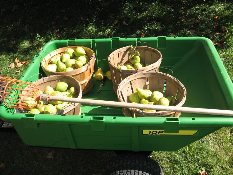 All the best pears from 2 Trees