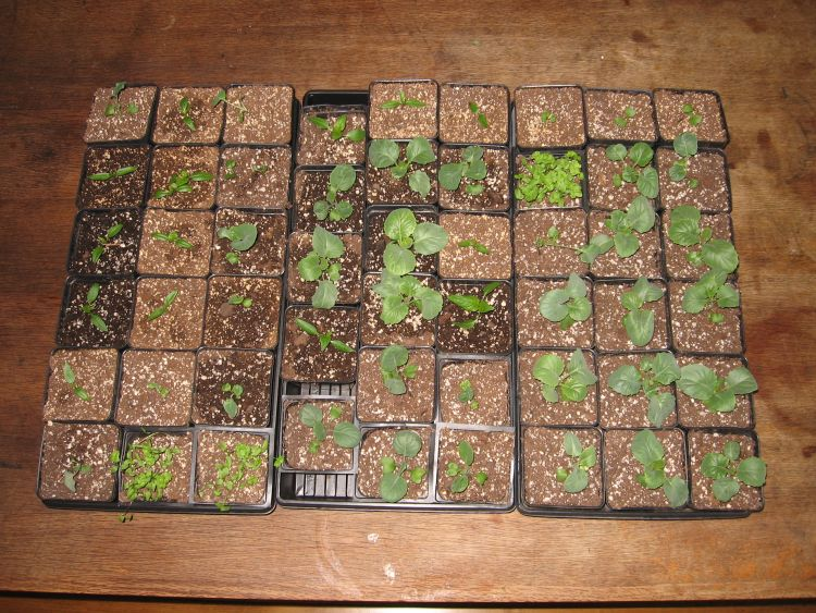 2020 Seedlings