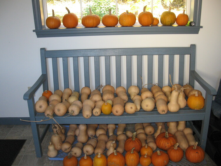 Waltham Butternut Squash and Sugar Pumpkins for Winter meals