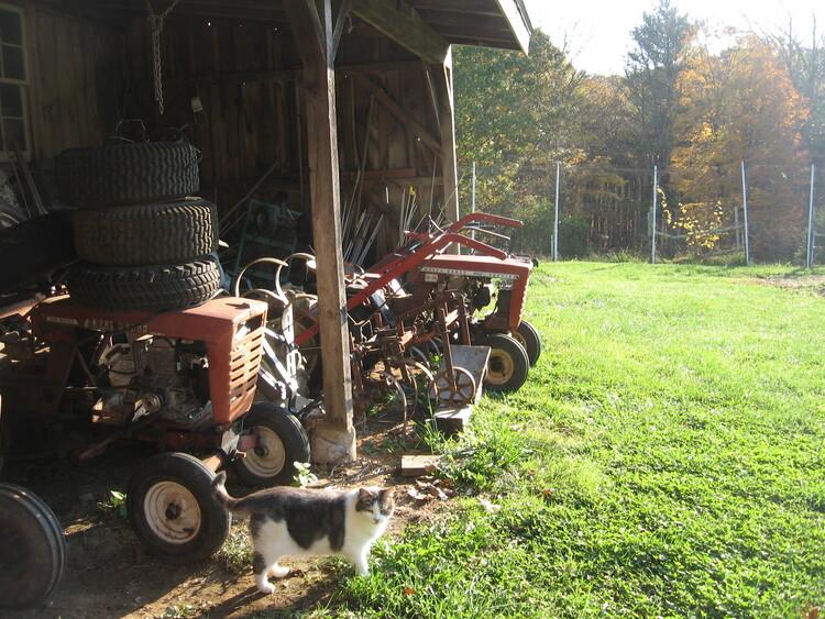 Garden Cat Millie & Garden Tractors