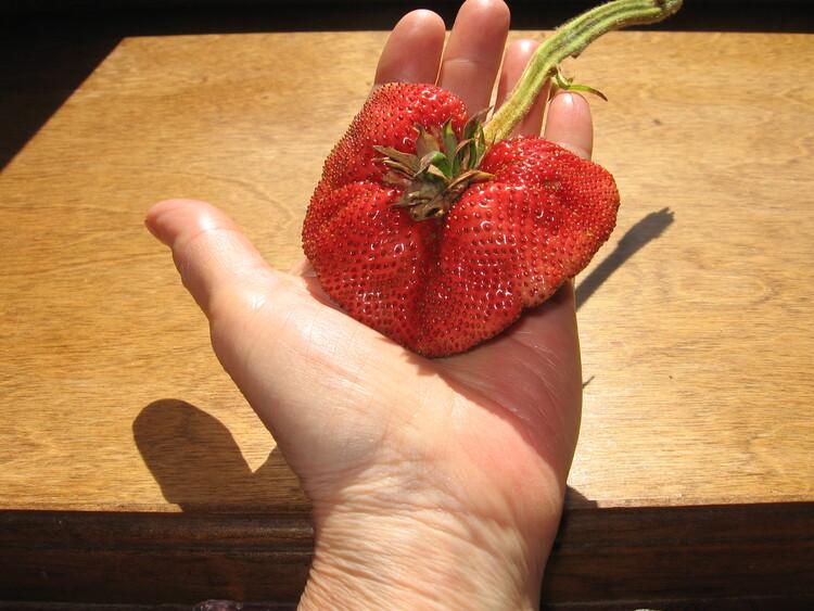 Giant Strawberry!