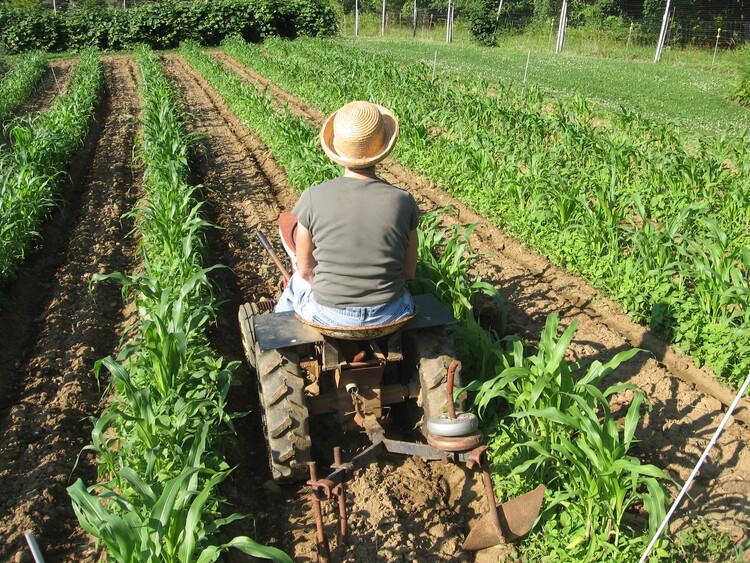 Garden Tractor Hills Corn