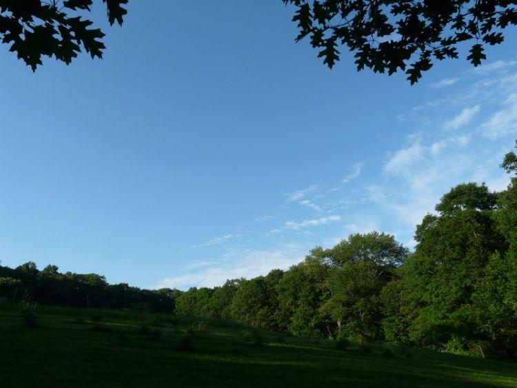 Field from Treeline